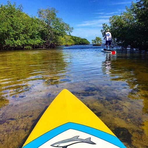Paddle boarding activities around Seabird Key offshore Marathon Florida in the Keys.