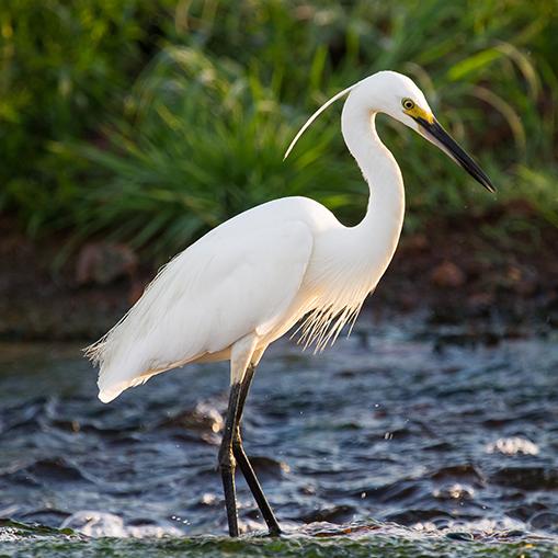 Bird watching activities on Seabird Key Island in the Keys.