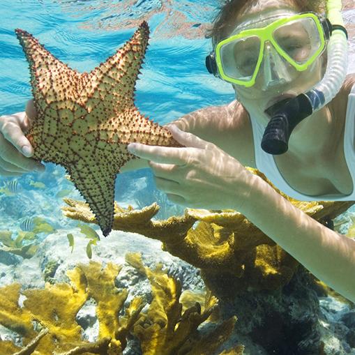 Snorkeling activities near Seabird Key Island offshore Marathon Florida in the Keys